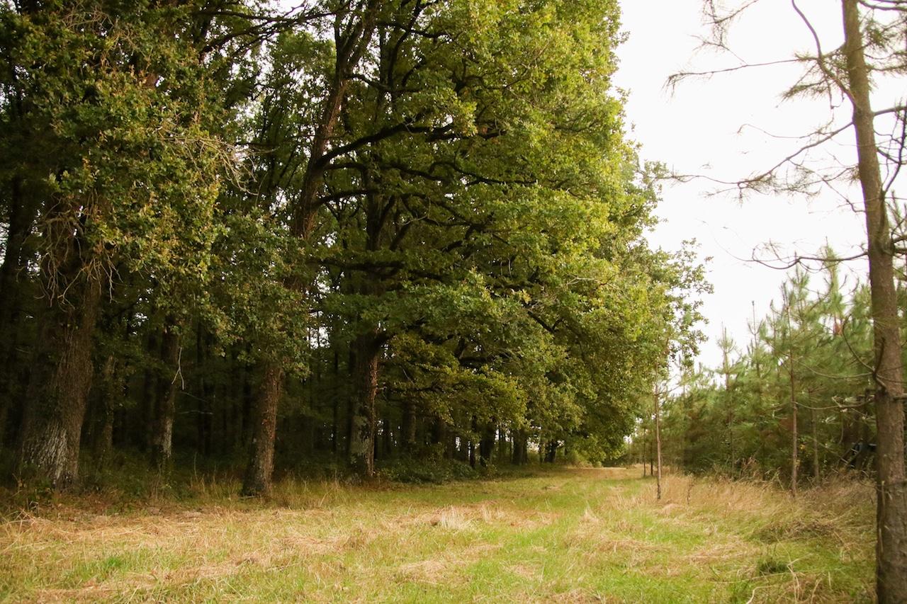 Forêt 13ha