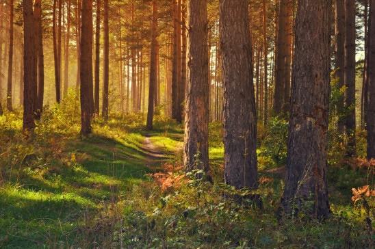 Forêt 206 ha