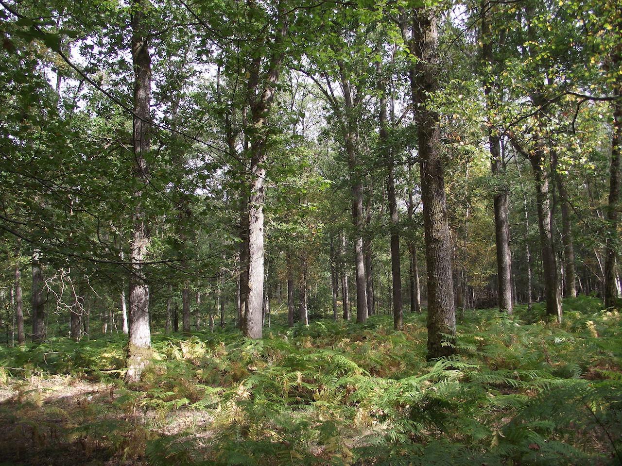 Forêt 62 ha