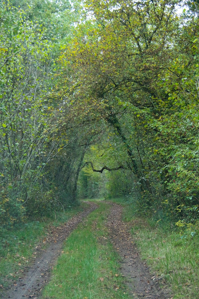 Forêt, Propriété de Chasse & d'Agrément 43ha