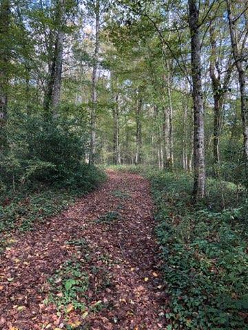 Forêt 45ha