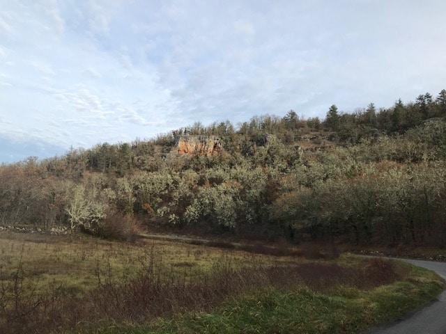 Forêt 155ha