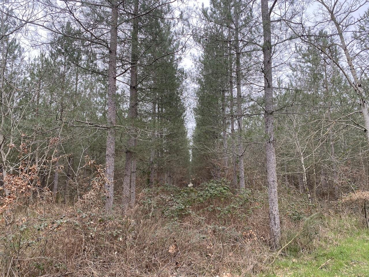 Forêt 97ha