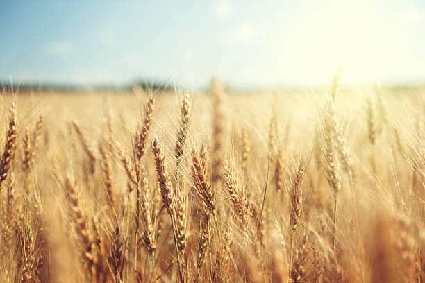 Terres Agricoles 119 ha