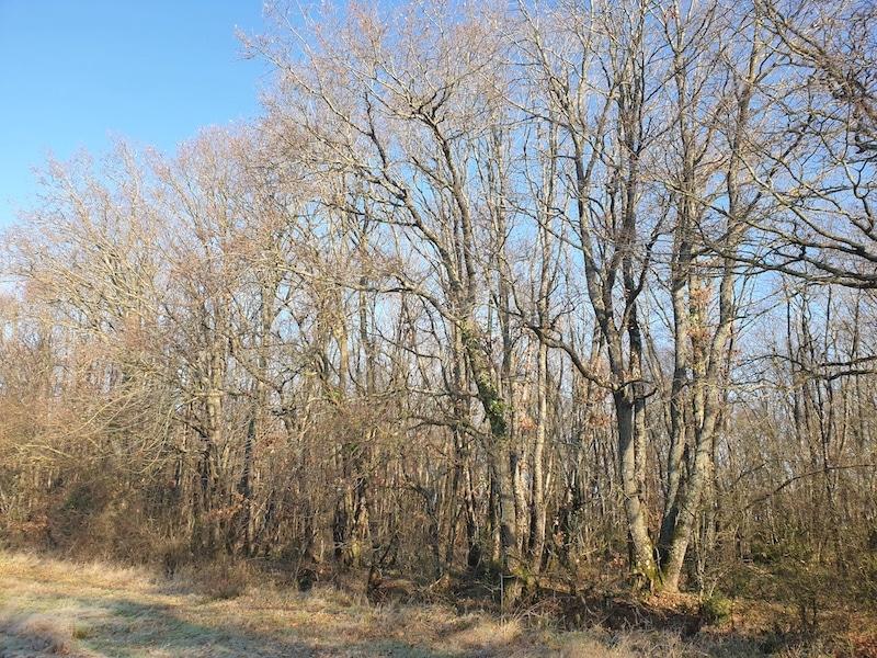 Forêt 6ha