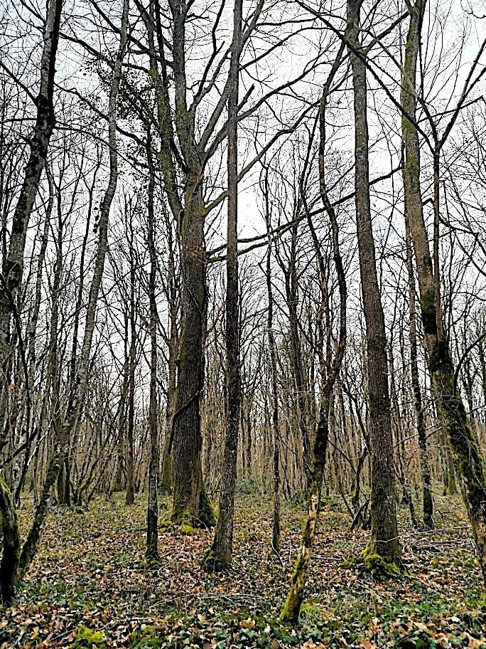 Forêt 114 ha. EXCLUSIVITÉ