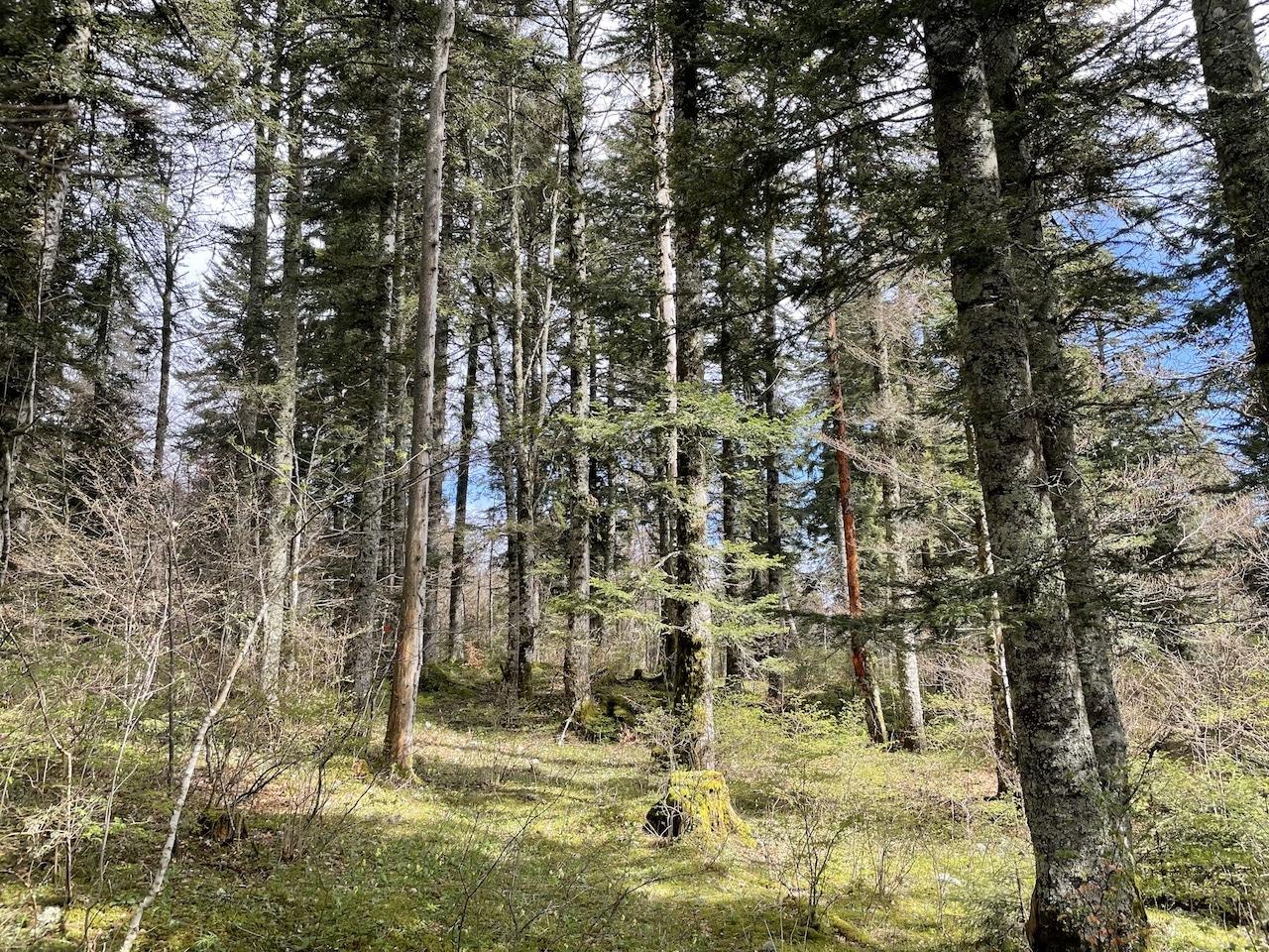 Domaine Forestier 140ha