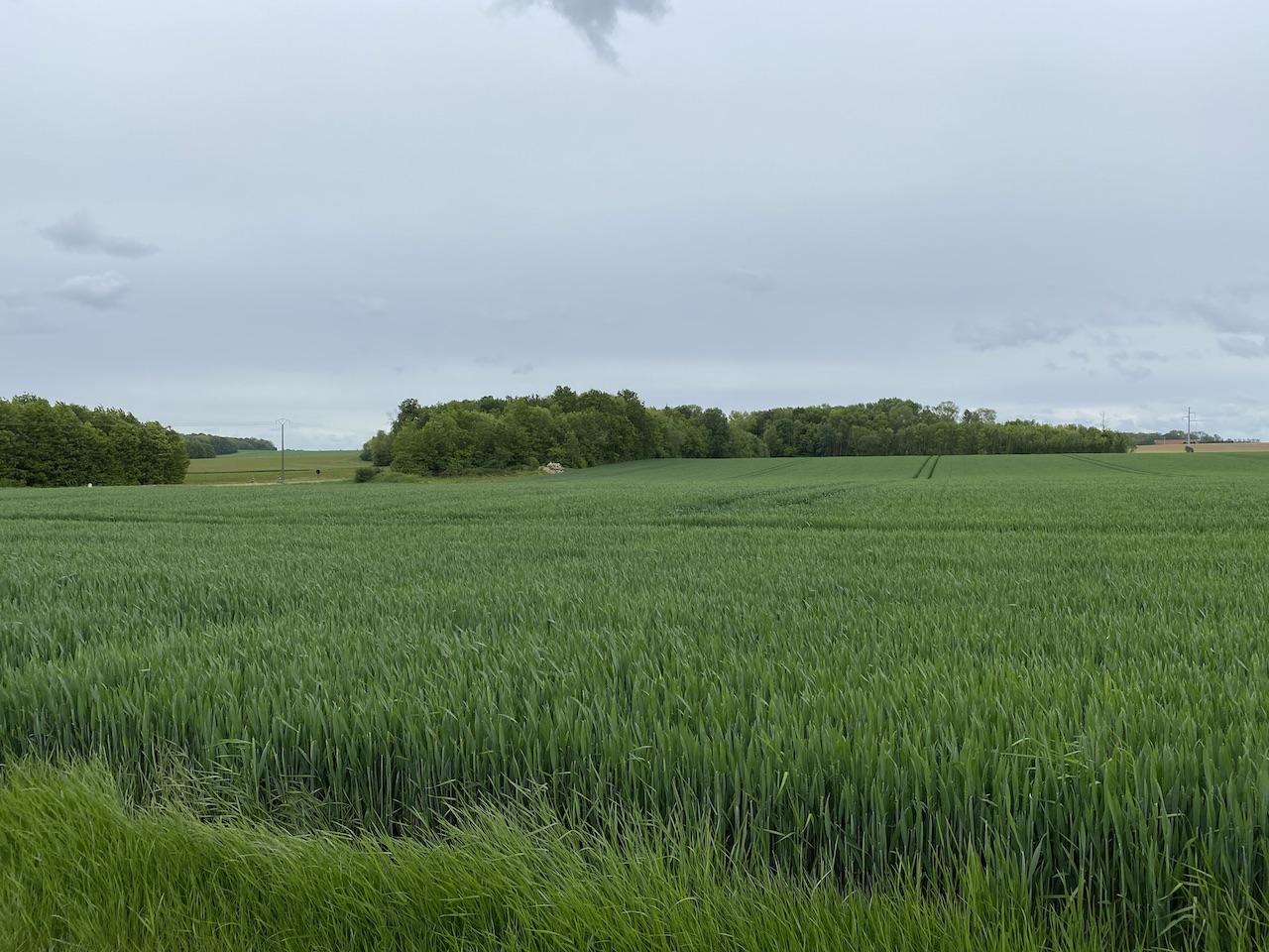 Domaine Agricole 113 ha