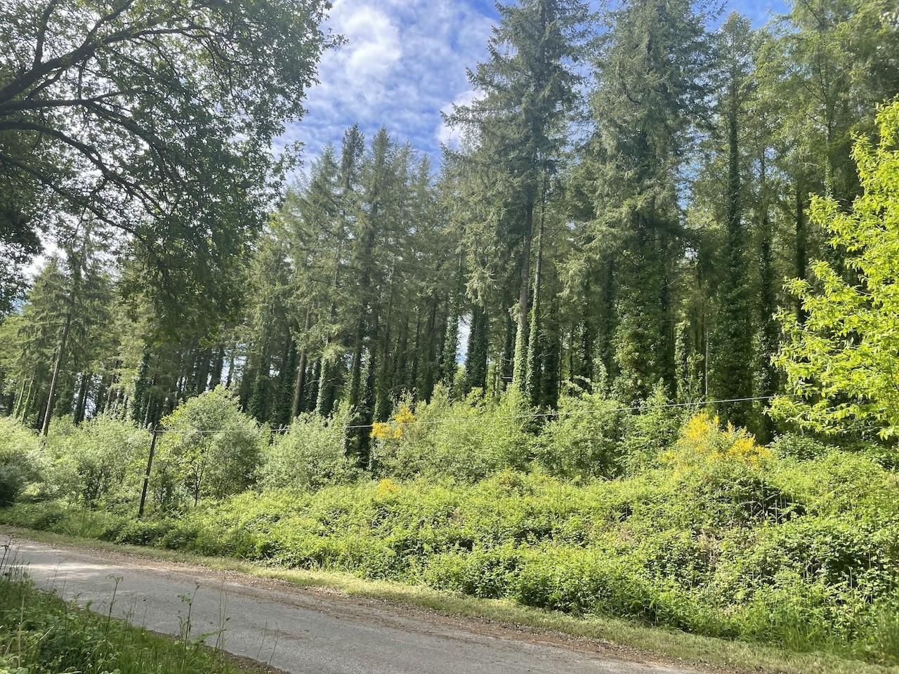Domaine Forestier 46 ha