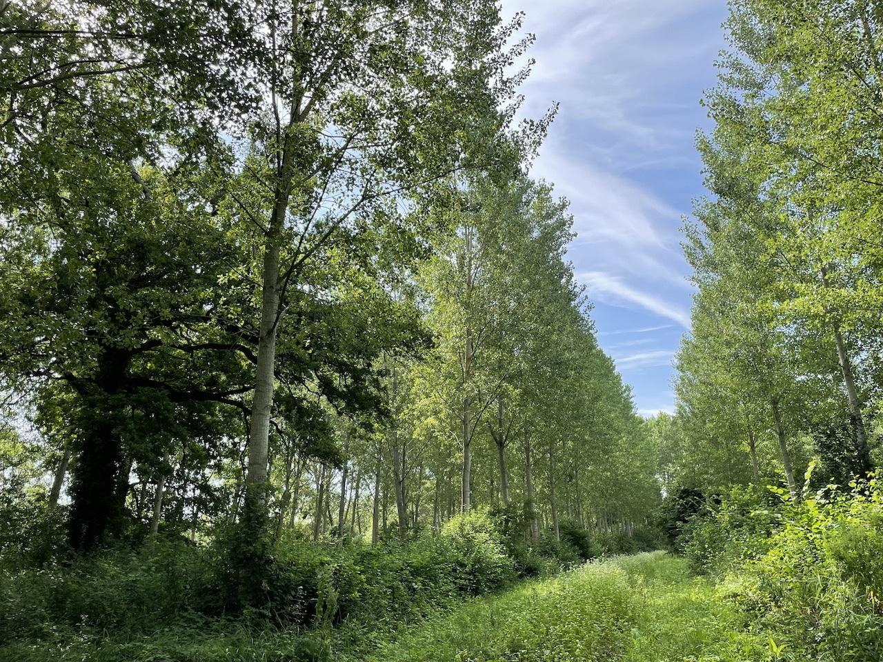 Domaine Forestier 85 ha